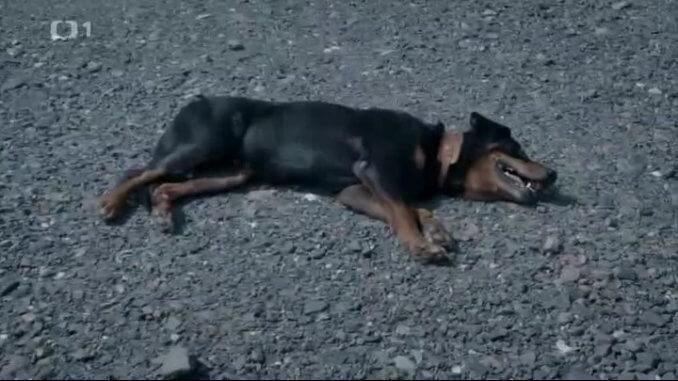 Omráčený (?) pes
